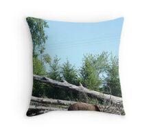 Ursus arctos horribilis Throw Pillow