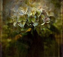 Hydrangea Blooms: A Token of Spring by Mansibhatia