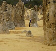 The Pinnacles #1  by Virginia  McGowan