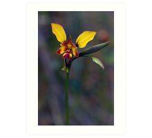 Wallflower Donkey Orchid Art Print