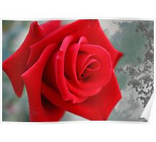 Red rose on art paper Poster