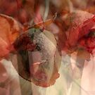 Dried Roses with Wonder by Lozzar Flowers & Art