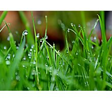 Dew on the Lawn Photographic Print