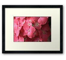 Coral Sea Of Hydrangea Framed Print