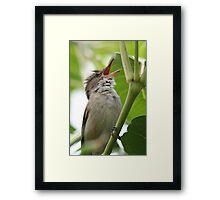 Australian Reed Warbler Framed Print