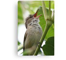 Australian Reed Warbler Canvas Print