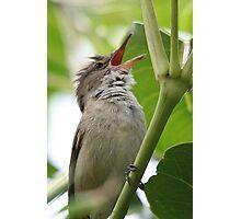 Australian Reed Warbler Photographic Print