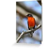 Flame Robin - Male Greeting Card