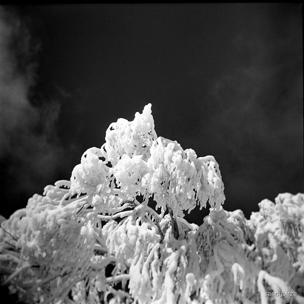 The White Tree by sandybirze