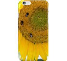 bumblebees taking nectar on sunflower iPhone Case/Skin