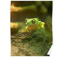 Lil' Green Tree Frog Poster
