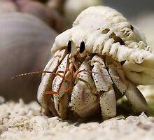 Hermit Crab by Paula McManus