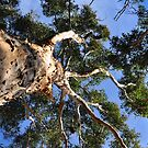 The tree above me by Jackie  Smith