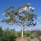 Giant Ghost Gum by Jackie  Smith