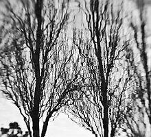 The Magic Trees - Sydney - Australia by Bryan Freeman