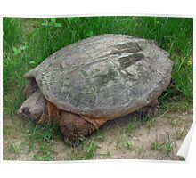Fluffy Snapping Turtle Poster