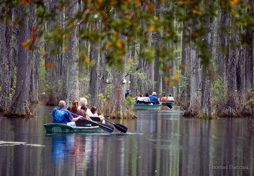 A Ride through the Cyprus Swamps in SC by TJ Baccari Photography