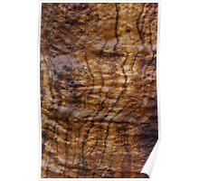 fresh wood grain Poster