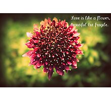 the story of love Photographic Print