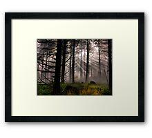Let The Light in Framed Print