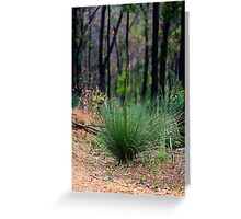 Young Xanthorrhoea Greeting Card
