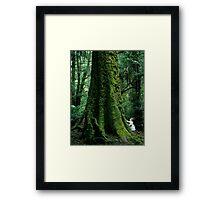 Mountain Ash (Eucalyptus regnans)  Framed Print