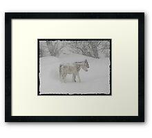 Snow Ponies....... Framed Print