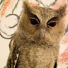 My Scops Owl drawing buddy by leunig