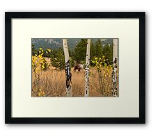 Beautiful Horse Through The Aspen Trees Trunks Framed Print