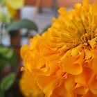 Orange Flower by micala
