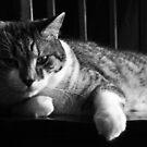 Lazy Is My J-O-B by Tracy Jansen