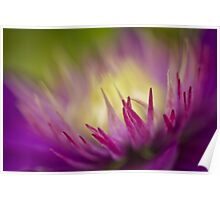 Summer colours in the clematis Poster