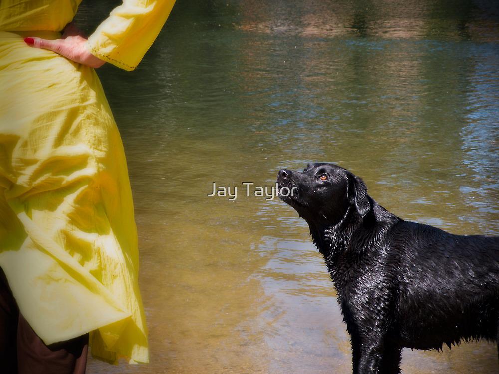 Freddie-on-Thames by Jay Taylor
