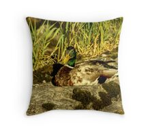 Mallard (Drake) Throw Pillow