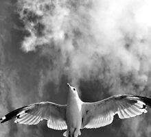 Onward & Upward by Heather King