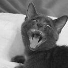 Demonic Kitten!! by Tracy Wazny