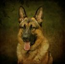 German Shepherd by Sandy Keeton
