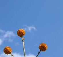 Flower x 3 - Buddleia by Yvonne North Moorhouse