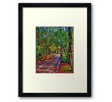 Houston Arboretum  Framed Print