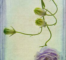 Campanula  by Ann Garrett