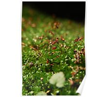 Moss Seedlings Poster