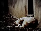 Deep Sleep by Mojca Savicki