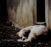 Deep Sleep by Mojca Savicki