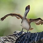 Brown Pelican Drying its Wings Revamped by Robert H Carney