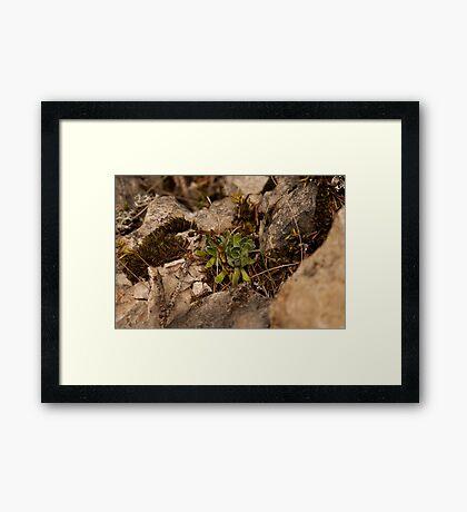 Isolated  Framed Print