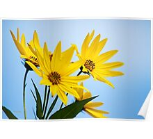 Meadow Sunflowers Poster