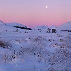 Highland Pink by donnnnnny