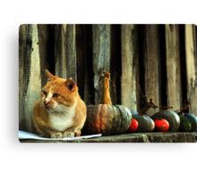 Kit Cat loves Pumpkins Canvas Print