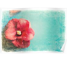 Aged Red Flower on turquoise background Poster