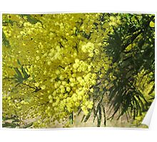 Colour of Spring in NSW (Australia) Poster
